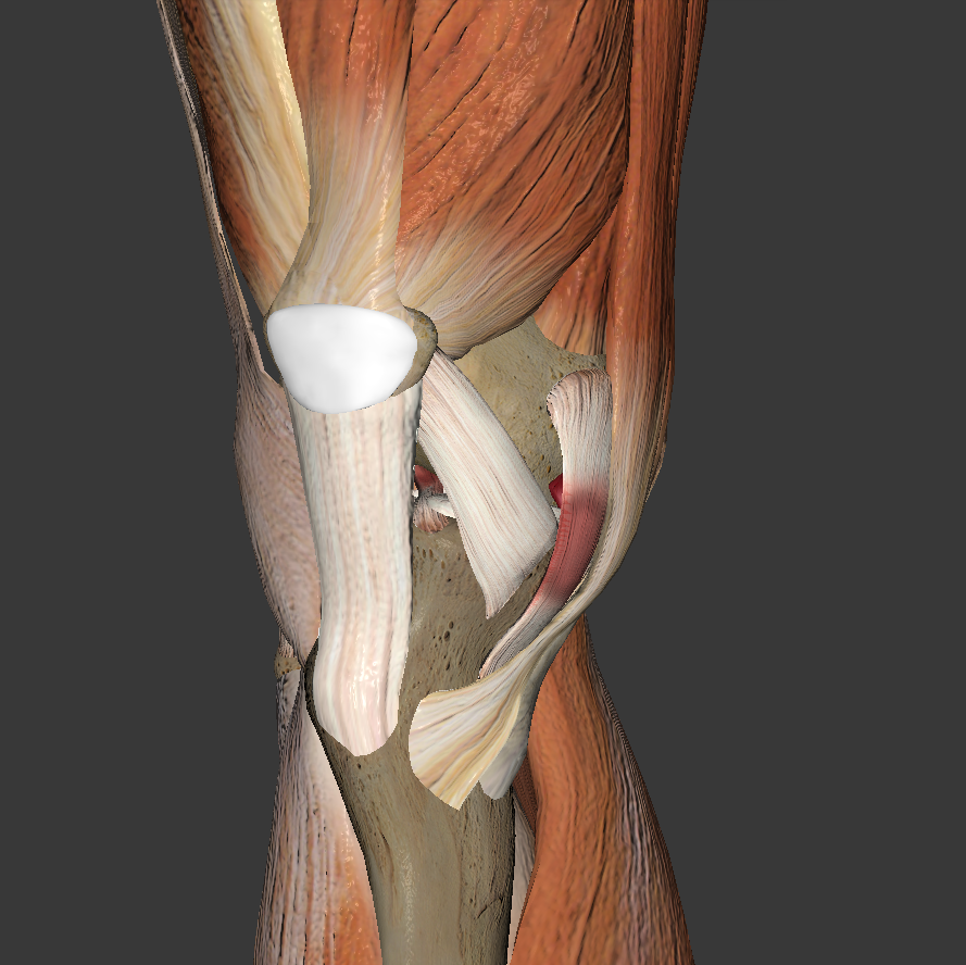 Right_Knee_Close.4cd8a63
